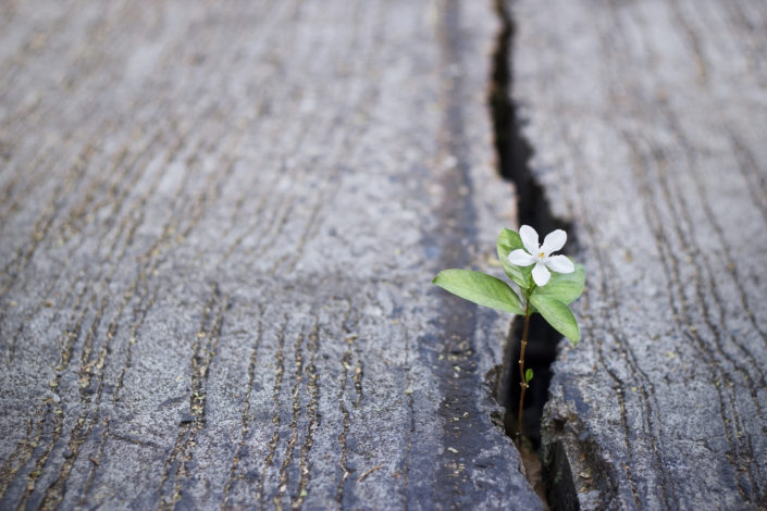 soul 2 soul healing brings new hope in picture of white flower growing on crack street, soft focus